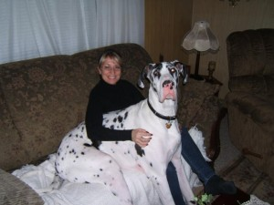 Big Baby Thor relaxing on the coach with his pet parent (Mary)