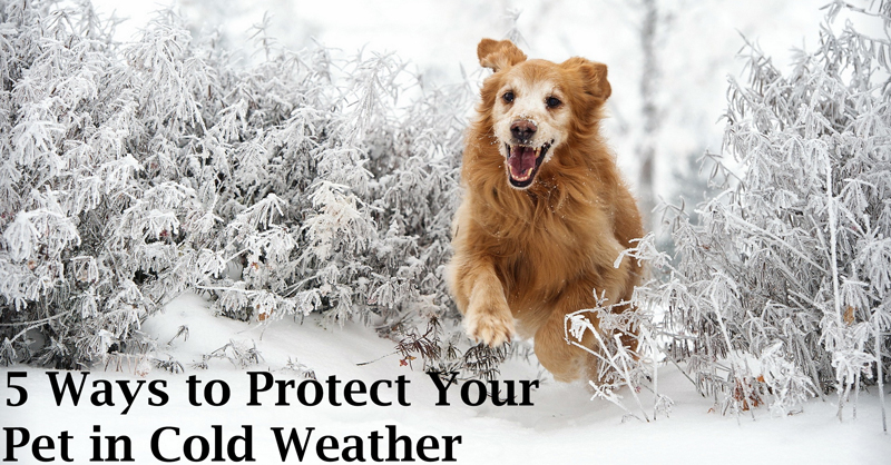 5 ways to protect your pet in cold weather